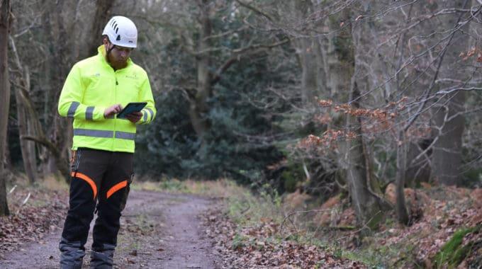 RINGROSE-Tree-Inspection