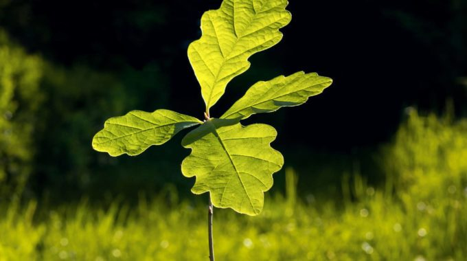 RINGROSE-Tree-Planting2
