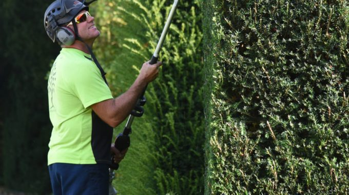hedge care