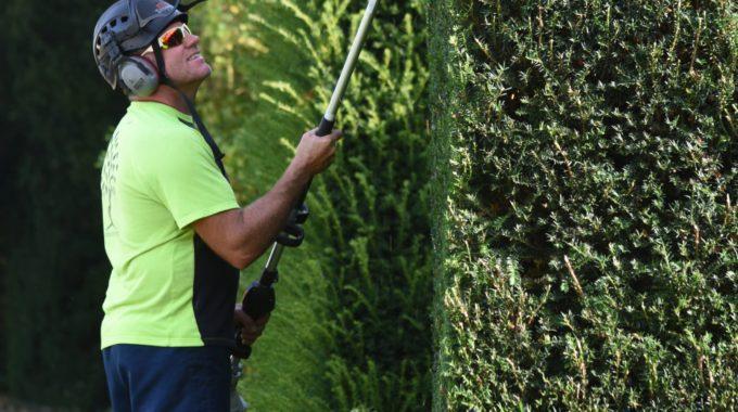 hedge care