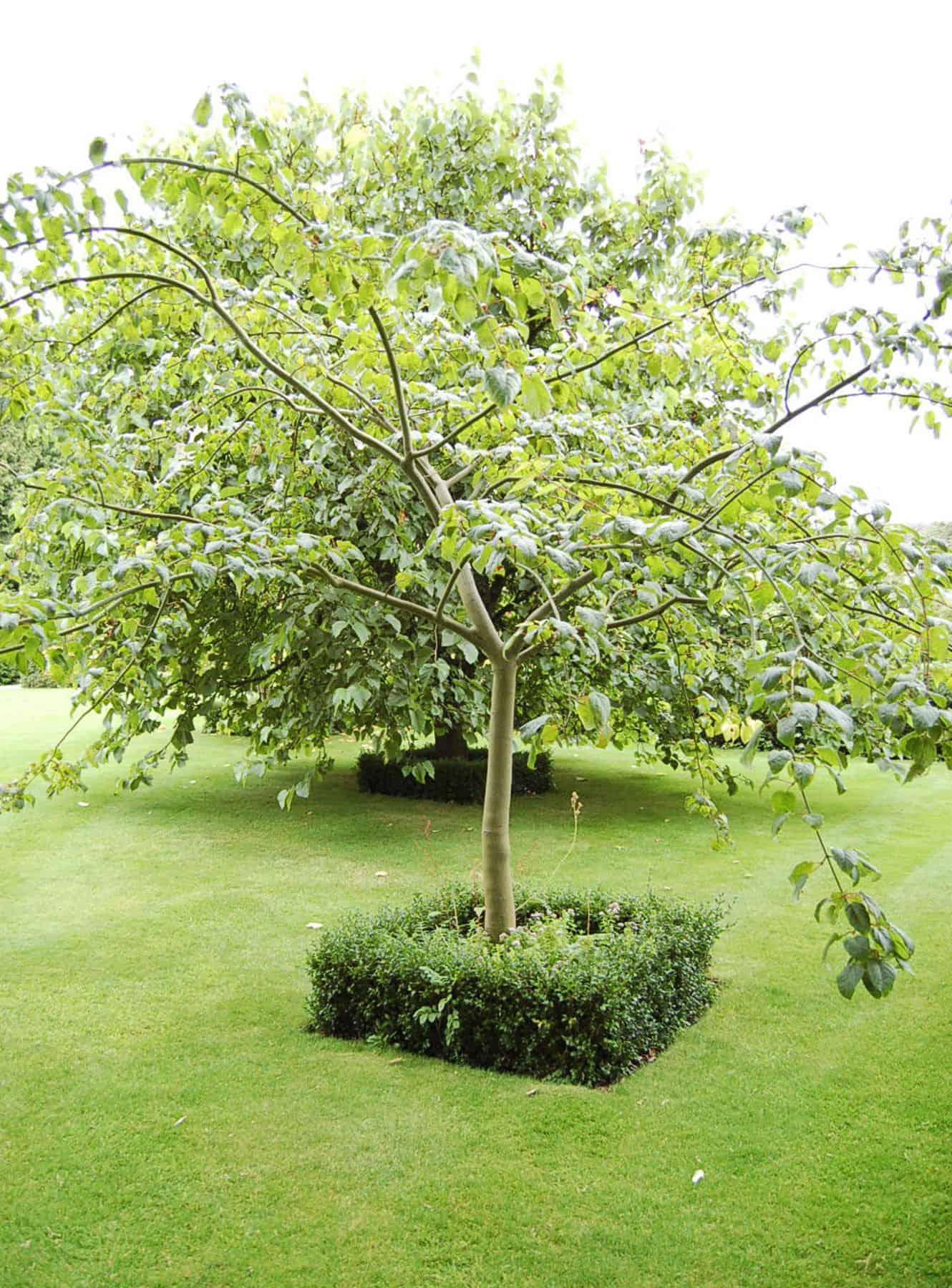tree-planting-3